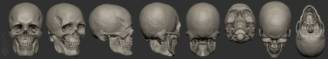 Male European skull turnaround