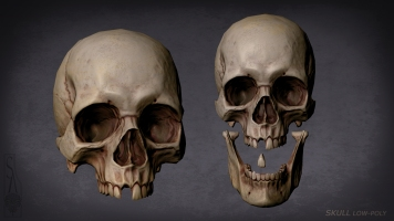 Skull separate model parts
